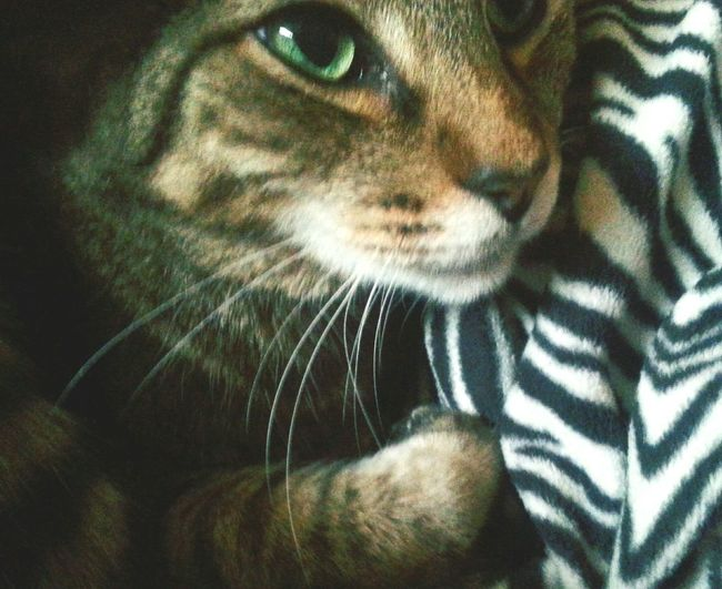 Meow My Cat Catlove Purrfect Purr Catnap Cat Eyes Mypal MyBoy My T.T.