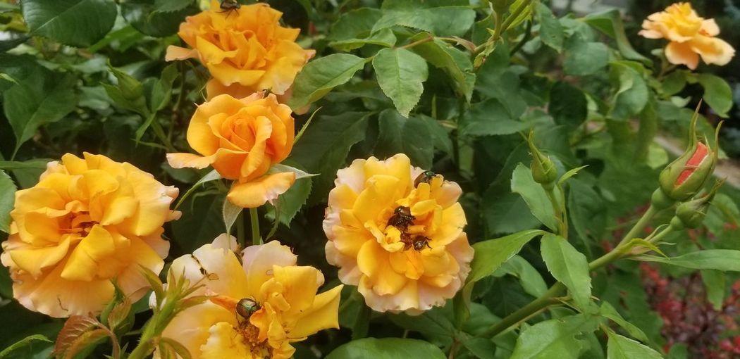 Beetles Flower