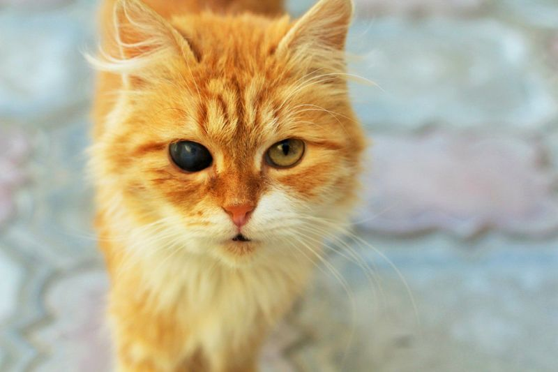 Animals Beautiful Cat Cat Eyes Ginger Cat Homeless Cat Red-headed Cat Street Cat EyeEm Diversity Cut And Paste EyeEm Selects Pet Portraits