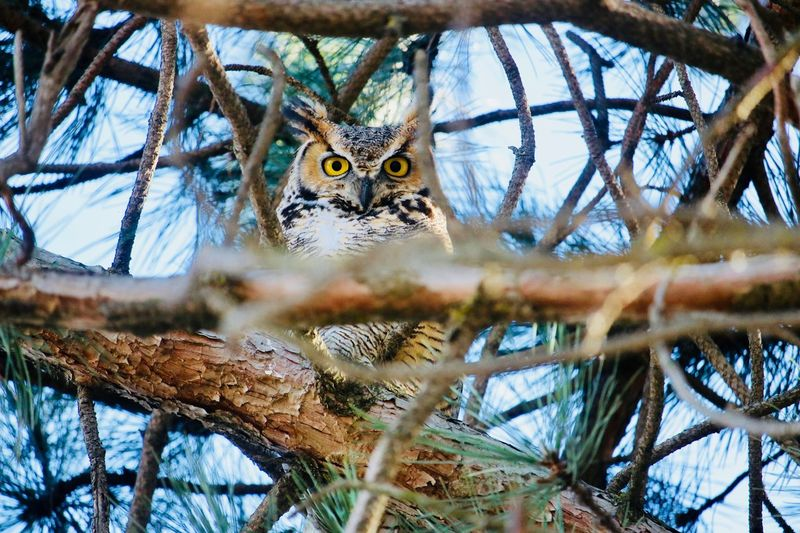 Low Angle View Portrait Of Owl Perching On Branch