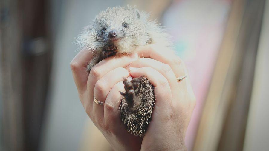 Animal Themes Hedgehog Friendship Animal Photography Animal Love