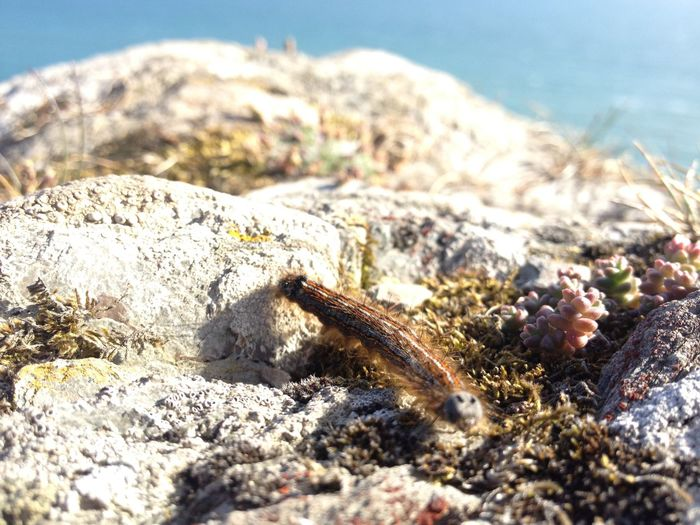 Catterpillar Close-up Coast Cornwall Growth Keep Your Eyes Open Little Friend Little Things Nature Rocky Sunny Day