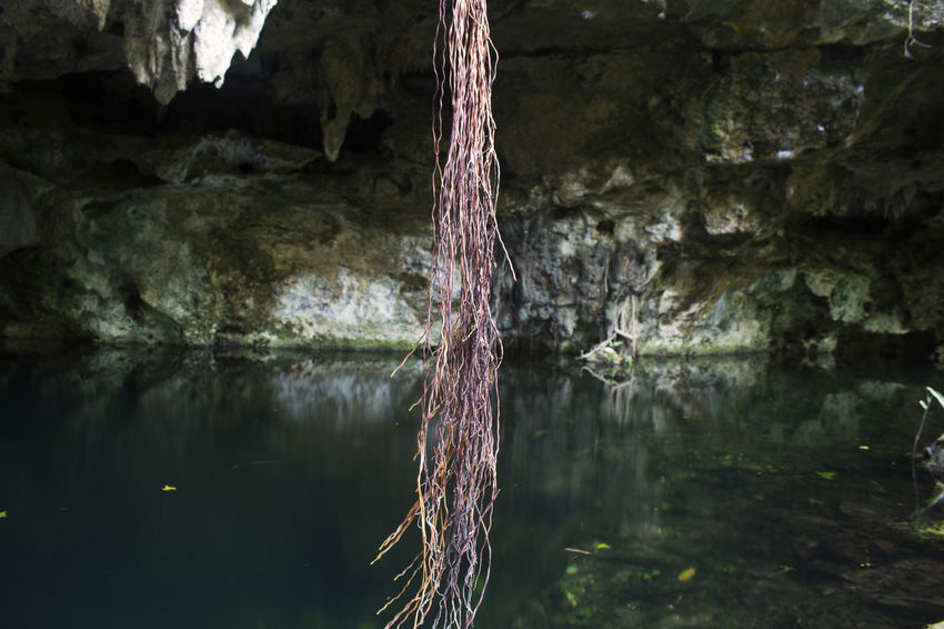 Reflection Water Nature Tree Day Outdoors Tranquility Close-up Beauty In Nature No People Cenotes Water Cave Cave Formations Caves Photography