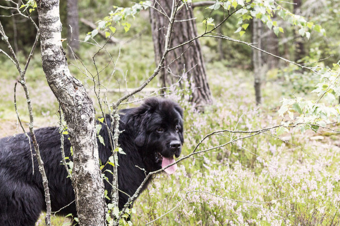 Onni in the Woods ©️JaniVauhkonen Mammal One Animal Dog Nature Pets Animal Domestic Animals Outdoors Animal Themes No People Day Grass Animal Wildlife Forest Animals In The Wild Tree African Elephant Canon EOS 600D JaniVauhkonen The Week On EyeEm