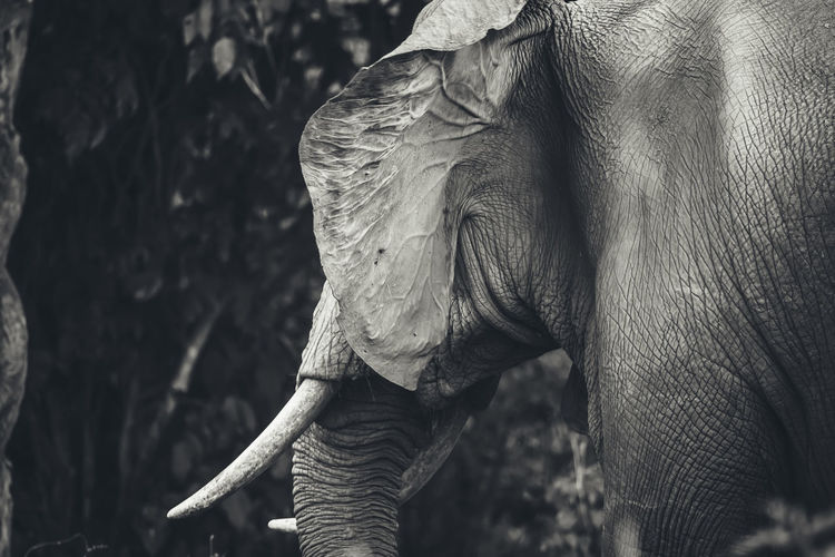 Animal Animal Themes Animals In The Wild Art And Craft Balance Contemplation Elephant Fashion Front View Full Length Mammal One Animal Part Of Side View Standing Togetherness Two Animals Wildlife Zoology