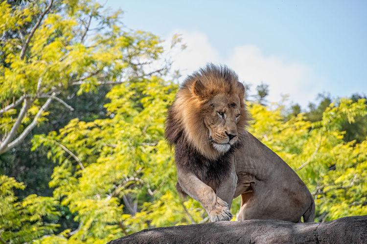Africa African