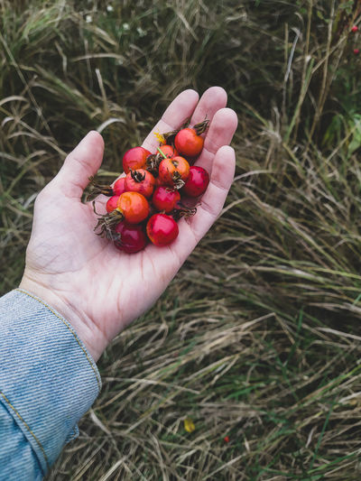 Cropped hand holding red berries on field