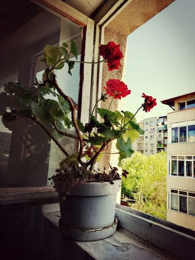Plant Growth Nature Sky Plant Lover Nature Lover🌳🍃🍂🌿 Peaceful Moment Tranquility Fragility Freshness Flower Power🌼 Red Flower No People Enjoy The Little Things Window