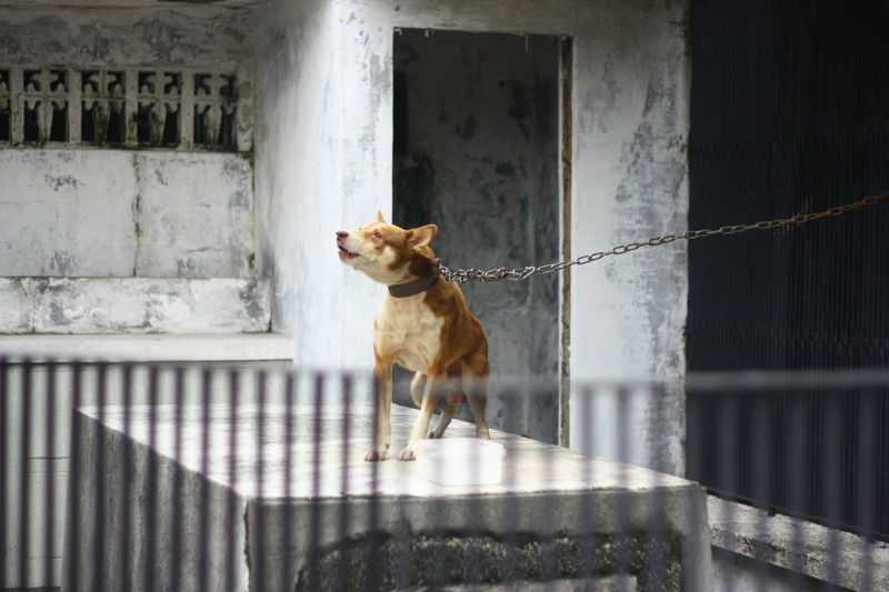 Dog Looking Away Against The Wall