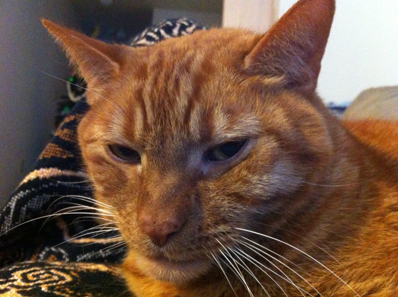 animal themes, cat, mammal, animal, domestic, pets, domestic animals, one animal, domestic cat, feline, whisker, close-up, vertebrate, indoors, no people, focus on foreground, animal head, animal body part, looking, relaxation, ginger cat, animal eye