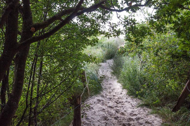 Narrow walkway in forest