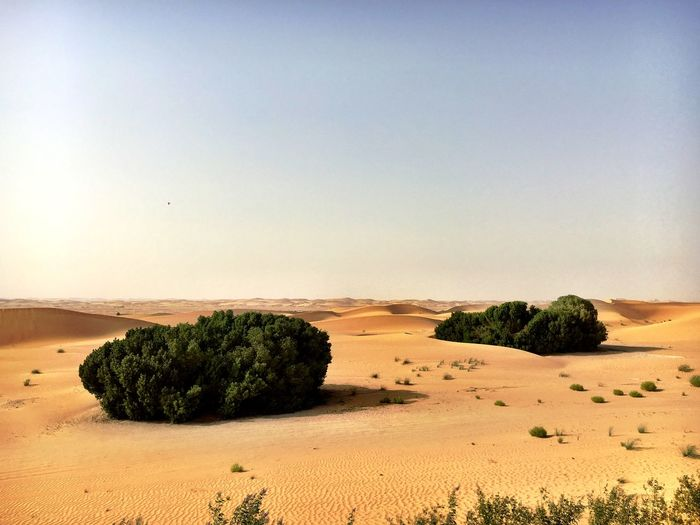Arid Climate Beauty In Nature Copy Space Day Desert Environment Growth Idyllic Land Landscape Nature No People Non-urban Scene Outdoors Plant Sand Scenics - Nature Sky Tranquil Scene Tranquility Tree
