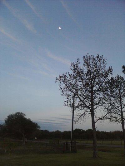Moon over Bucks Bayou Moon Night Sky Texas At Night