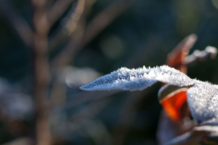 Icy morning Cold Temperature Snow Winter Day Close-up Nature Selective Focus Plant Focus On Foreground No People Beauty In Nature Frozen Tree Outdoors Growth Leaf White Color Ice Hoarfrost Frost Frozen Ice Icy