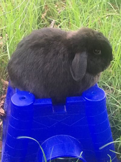 King Of The Castle Bunny  Rabbit Pet Grass Hanging Out Taking Photos Outside Taking Pictures Enjoying Life Hello World
