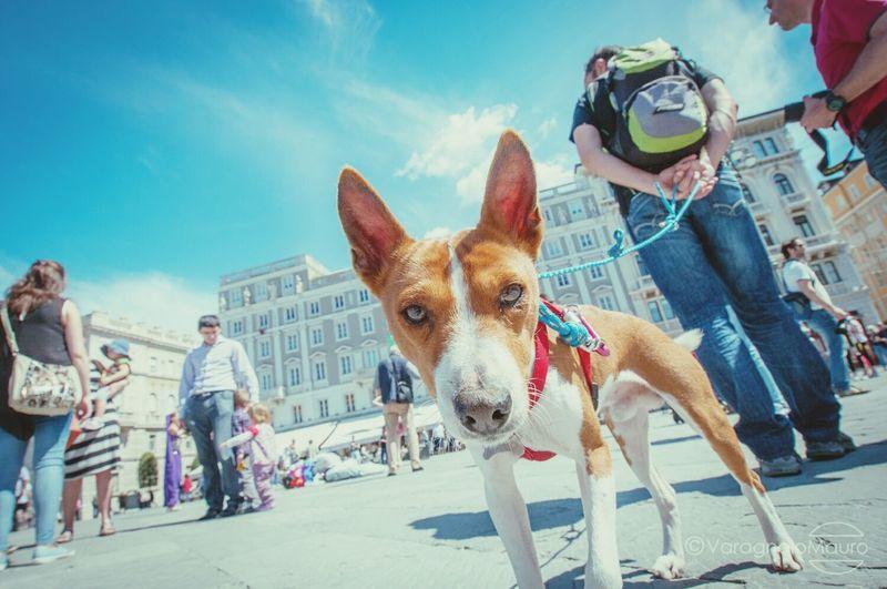 Dog TriesteSocial Circolofotograficotriestino Comune Di Trieste Streetphotography Trieste Dog E Man Piazza Unità