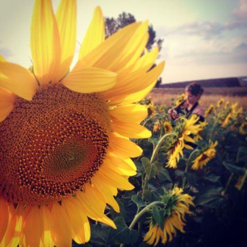 Pueblito Pueblodeteruel AlbadelCampo Village sunflowers girasoles atardecer