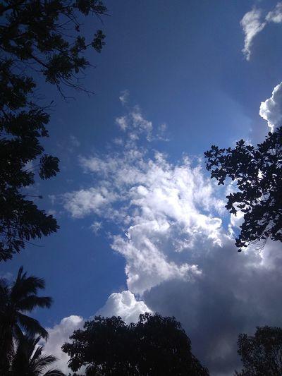 Tree Blue Sky