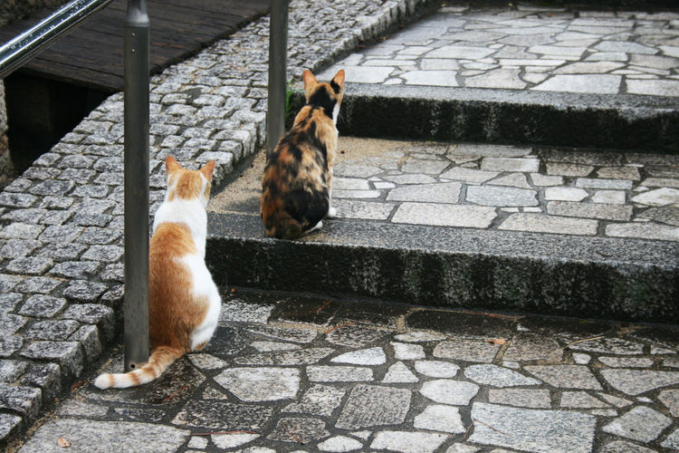 #Cats #animal #friends #gray #japan #rainyday #stairs #street Cat Group Of Animals