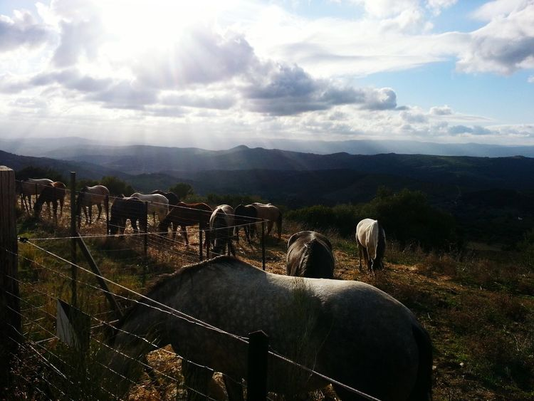 Rural Scene Horse Life Sunlight Nature Landscape_photography Beautiful Nature Smart Simplicity Spain, Andalucia Art Is My Life Open Edit For Everyone Smartphone Photography Hello World Dreamer Walking Around Hanging Out Love This Day🌞💜 National Geographic Relaxing Beautiful