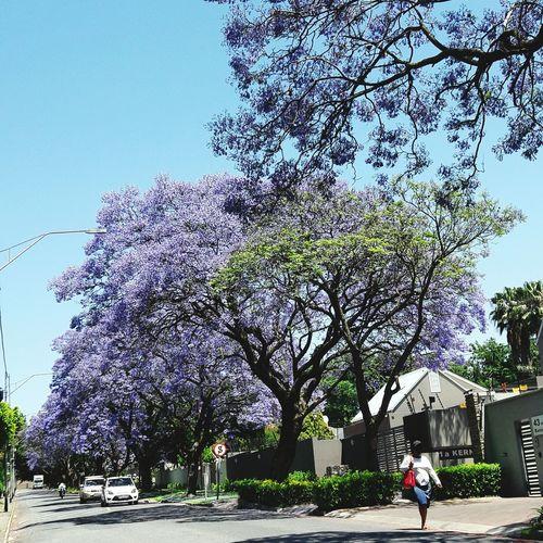 Flower trees against sky
