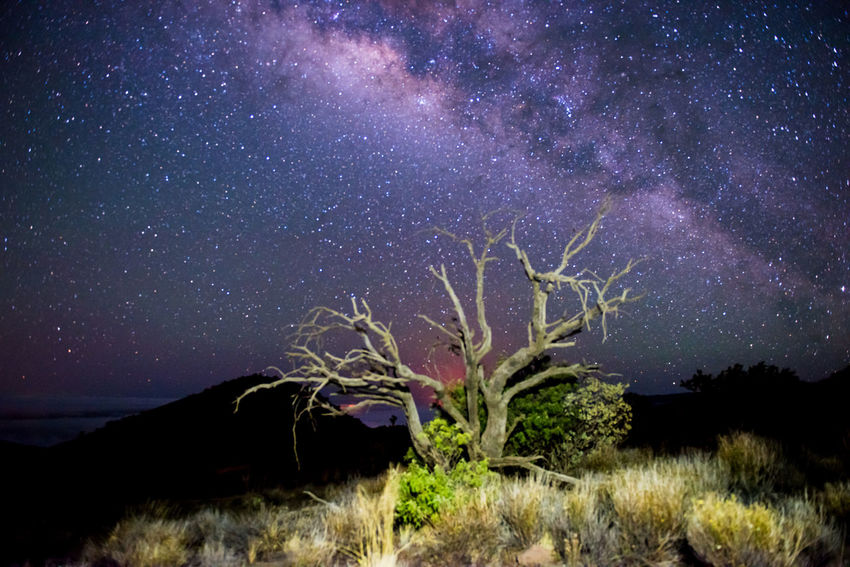 A clear night sky of millions of stars and the Milky Way galaxy arches over a gnarled, twisted, dead tree on the slopes of Mauna Kea: the tallest mountain in Hawai'i and a perfect spot for stargazing. Big Island Hawaii Clear Sky Dead Tree Galaxy Gnarled Gnarly Hawaii Mauna Kea Shrubs Tree USA America Astronomy Astrophotography Milky Way Night Night Sky Stargazing Stars