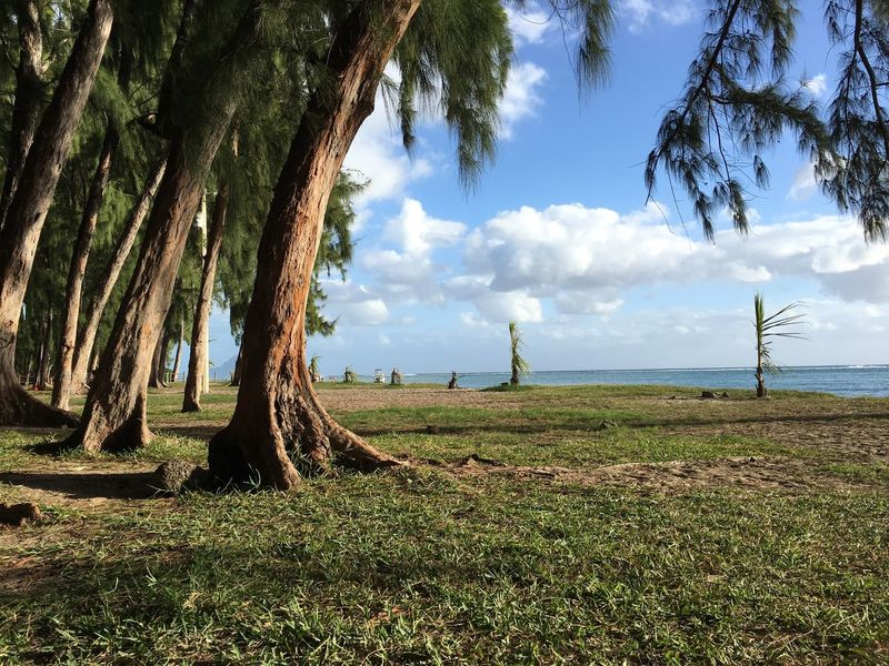 Day IPhone 6s IPhone Photography Beauty In Nature Sky Tree Outdoors Beach Beach Day Mauritius Mauritius 2016♡♡♡♡♡