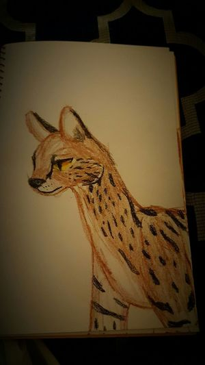 Drawings Jozlyn Cat Lovers Fueling The Imagination Art, Drawing, Creativity Talented Check This Out Art Artistic Freestyle Freestyledra