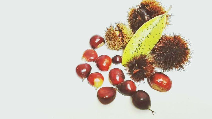 Chestnut Leaf White Background Studio Shot Close-up Food Indoor Photography Brown Fruit Seed Indoors