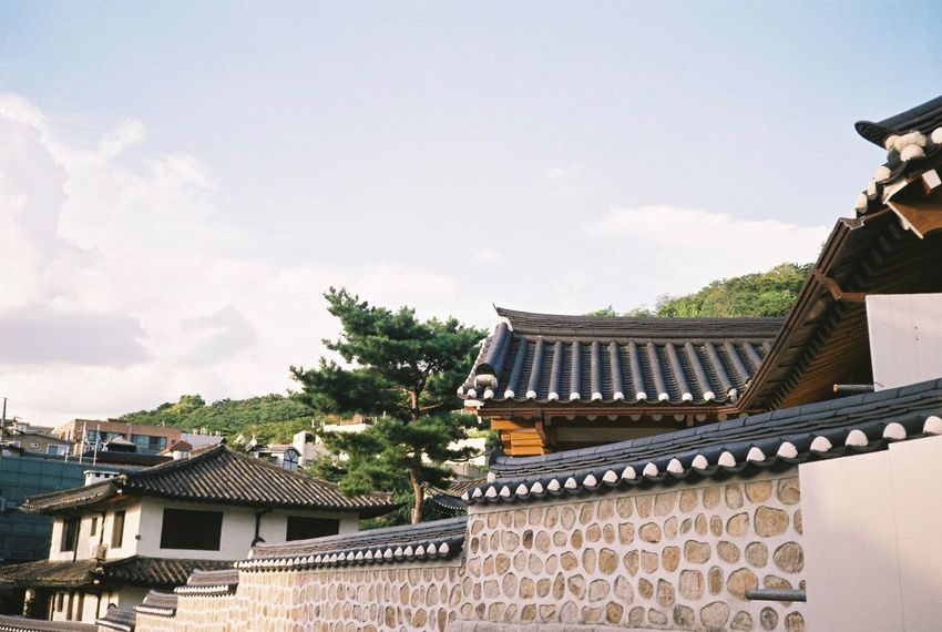Hanok Tree Tiled Roof  Sky Outdoors No People Day Roof Built Structure Building Exterior Architecture Korean Traditional Architecture Korea Photos South Korea Minolta X700 Minolta Film Photography