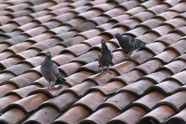 Full frame shot of birds on roof