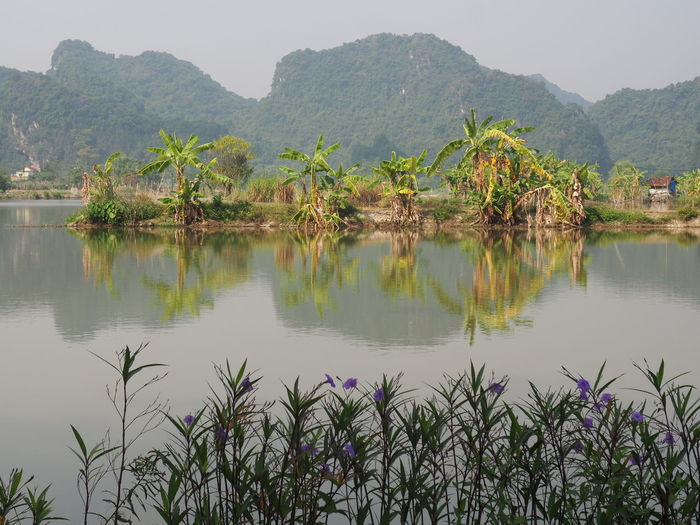 'The inland Ha Long Bay' EyeEm Nature Lover Water Plant Nature Beauty In Nature Mountain Tranquility Scenics - Nature Idyllic Palm Tree Non-urban Scene Reflection