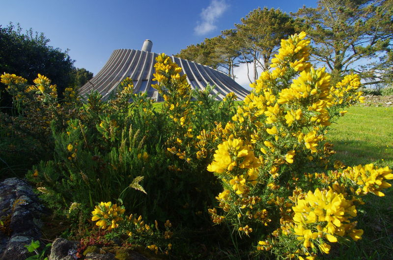 Architecture Brittany Modern House Beauty In Nature Building Exterior Flowers Gorse Flowers Nature No People Outdoors Sky