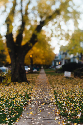 This Is Strength Selective Focus Outdoors Autumn Focus On Foreground Direction Growth Plant Part Day The Way Forward No People Plant Tree Beauty In Nature Nature Leaf Tranquility Park Diminishing Perspective Footpath Street Change Autumn Fall