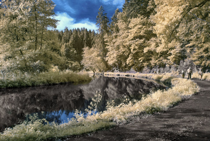 Stausee (IR,590nm) 590nm Austria Austria ❤ Austrianphotographers Beauty In Nature Day Infrared Infrared Photography Nature Oberösterreich Outdoors Reflection Supercolor Tranquil Scene Tranquility Tree Water WoodLand First Eyeem Photo