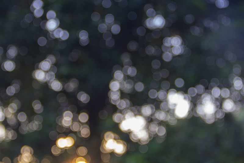 DE focused image of illuminated lights (Bokeh) Abstract Backgrounds Black Background Bokeh Bokeh Photography Canon Canonindia Christmas Close-up Defocused EyeEm Best Shots EyeEm Nature Lover EyeEm Vision Green Illuminated India Large Group Of Objects Light Effect Mangalore No People Outdoors Shiny Sunrise Travel Tree