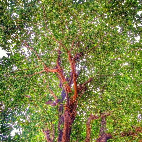 اشجار شجره شجرة شمس سطوع الجنوب الربوعه ابها السودة تصويري محمد_السنيدي الرياض دبي الكويت ff