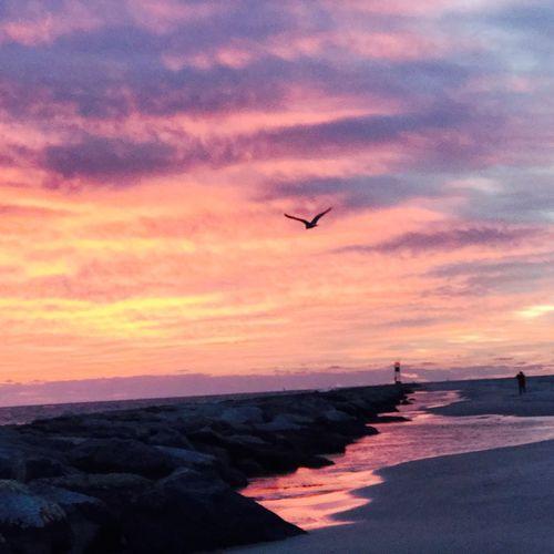 Purple Sunrise Sunrise - Dawn Sky Beauty In Nature Flying Scenics - Nature Cloud - Sky Sea No People Bird Water Orange Color