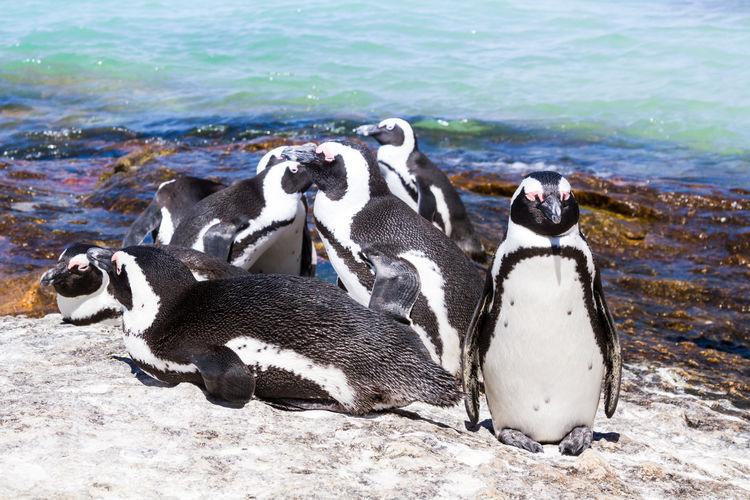 Penguins on coast