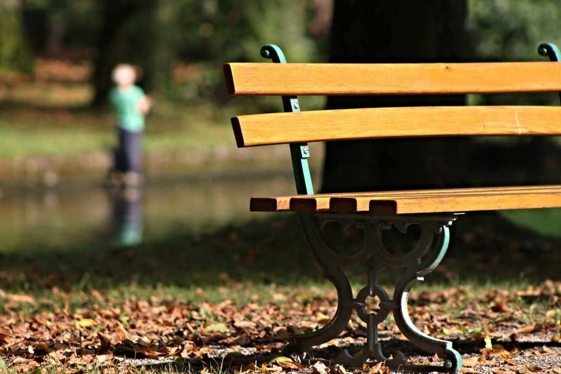Empty Bench In Park On Sunny Day
