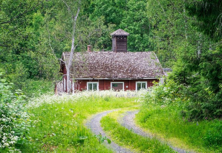 Old and abandoned cottage with lush green plants at summer day in Finland Plant Architecture Built Structure Grass Tree Building Exterior Green Color Building Growth Nature House No People Landscape Roof Direction Outdoors Rural Scene Finland Path Road Abandoned Old Beauty In Nature Green Color Lush Foliage
