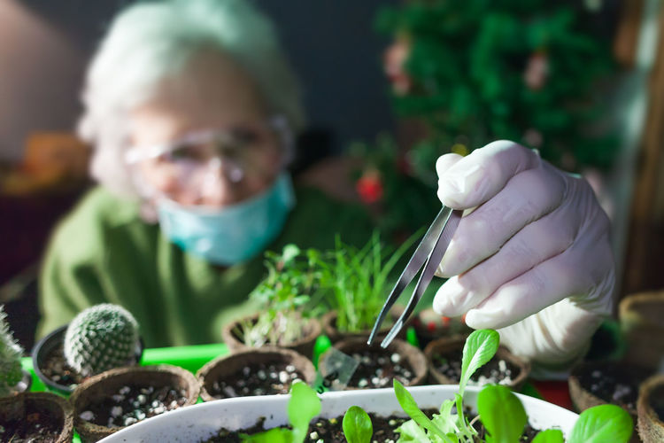 woman botanist experimenting with microgreen plants Women Nature Gardening One Person Holding Portrait Front View Green Color Growth Plant Planting Burgeon Blossom Growth Pot Organic Seed Seedling Microgreens Experimenting Blurred Background Equipment White Glove Sterile Conditions Hand Botany Botanic Agriculture Gardening Expand Develop Leaf Garden Spring Sprout Life Growing Vegetable Fresh Natural Soil Fertilizing Development Fertile Care Sustainable Sustainability
