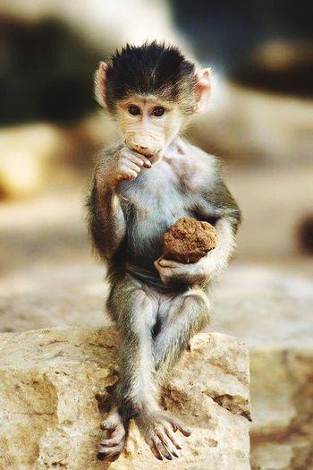 Is she cute 👌 Cute Cute Animals Animals Sweet Inocent♥ Likeagirl
