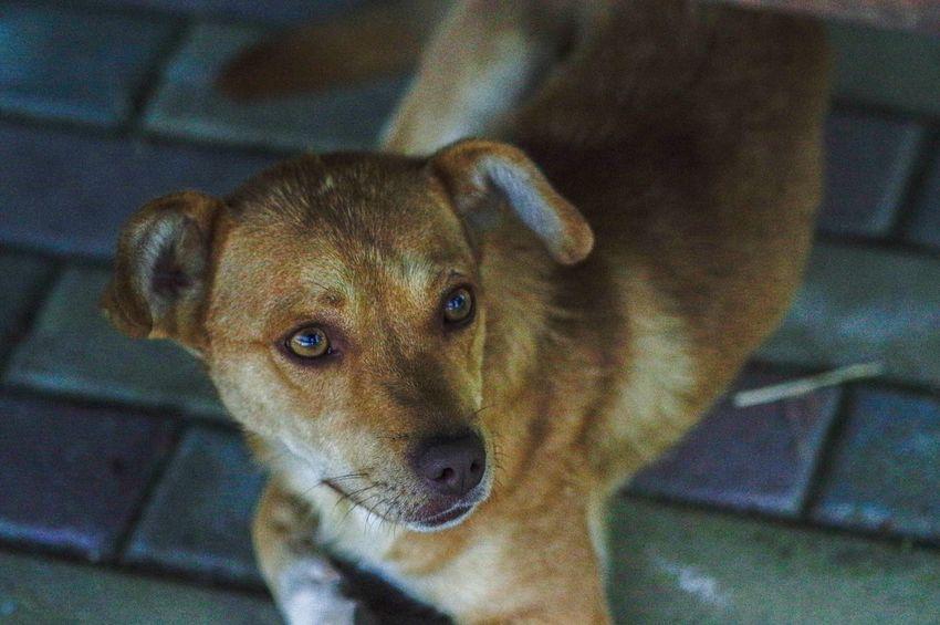 Pentax Cute City Life Hometown Animal Pets Dog No People First Eyeem Photo