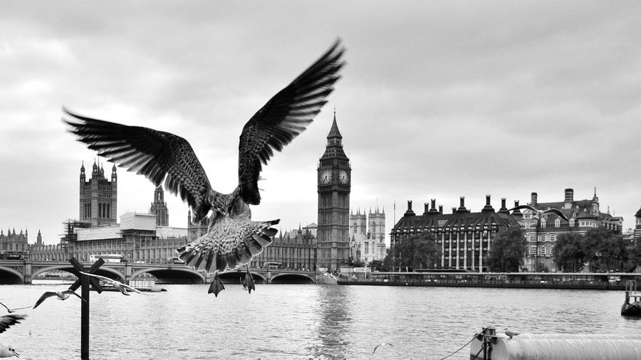 Bird flying over river with city in background