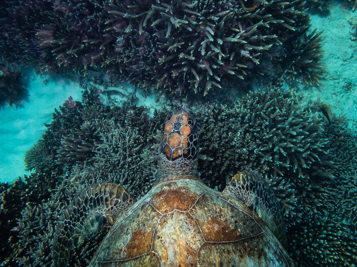 Turtle on coral in sea