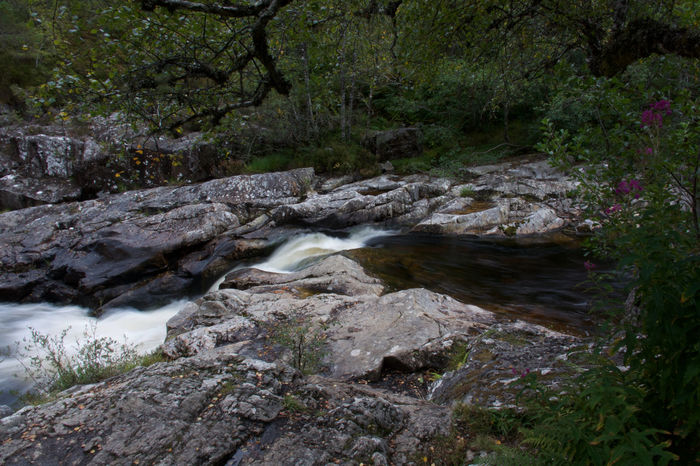 Glen Affric Beauty In Nature Blurred Motion Dog Falls Flowing Flowing Water Forest Land Long Exposure Motion Nature No People Outdoors Plant Power In Nature Rainforest River Rock Rock - Object Scenics - Nature Solid Stream - Flowing Water Tree Water