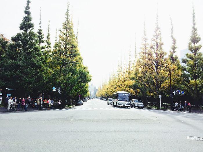 いちょう並木 いちょうまつり 神宮外苑いちょう並木 明治神宮外苑 外苑 Tokyo Fall