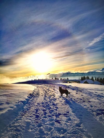 dogs life Austria Walking My Dog Clouds And Sky Mountain Range Dogs Of EyeEm Snowcapped Mountain Dobratsch Mountain View Watching Dogs Sunset_collection Standing Alone Sunset Cold Temperature Dog Beach Sea Outdoors Cloud - Sky Sky Nature Snow No People Beauty In Nature Tranquility Winter Day Scenics Animal Themes