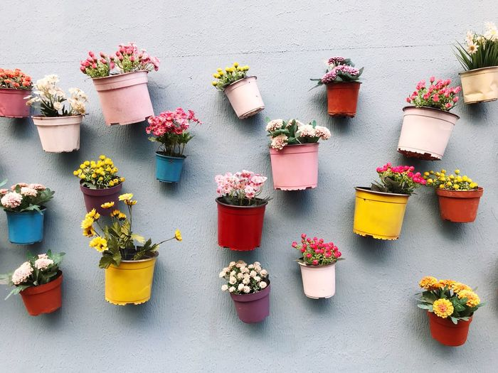 Multi colored potted plants against wall